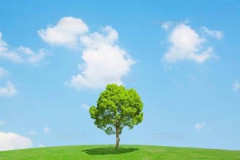 誰かこの画像の木を消しての画像1枚目!
