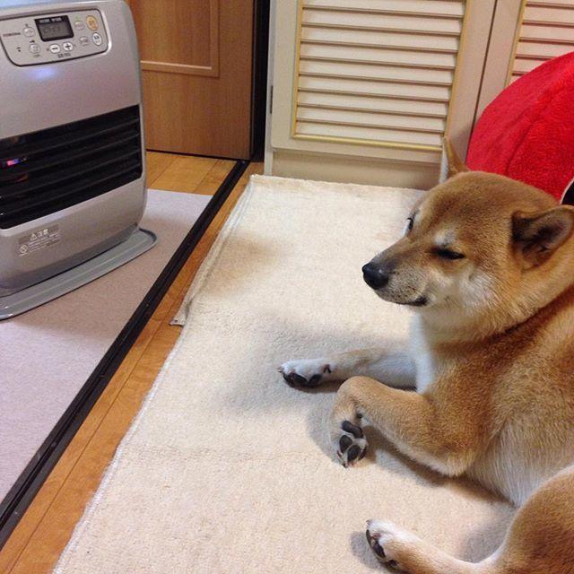 駄犬「ごすずんさむいんだけど」の画像10枚目!
