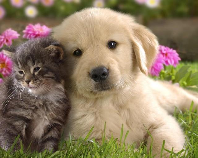 ネコとイヌはどっちが可愛いのかの画像16枚目!