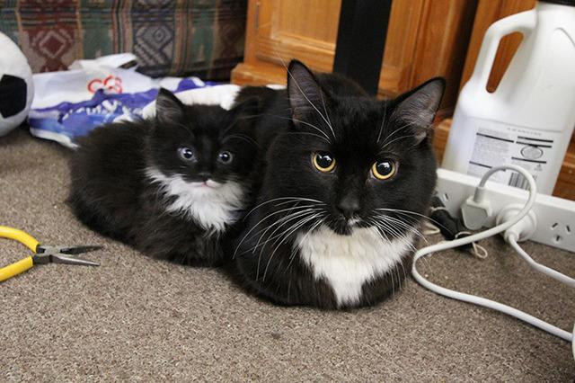 子猫の画像2枚目!
