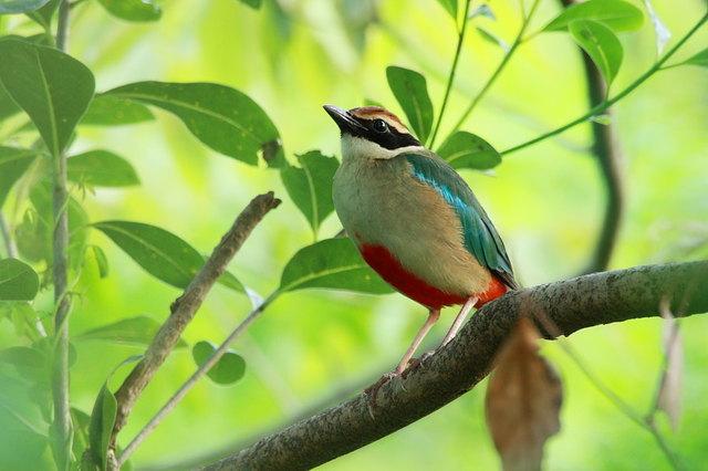 【愛鳥週間】県鳥の画像を貼ってくの画像107枚目!