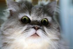 猫の画像43枚目!