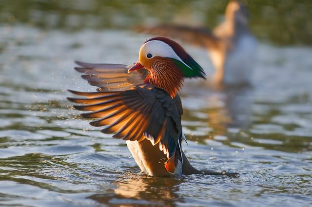 【愛鳥週間】県鳥の画像を貼ってくの画像20枚目!