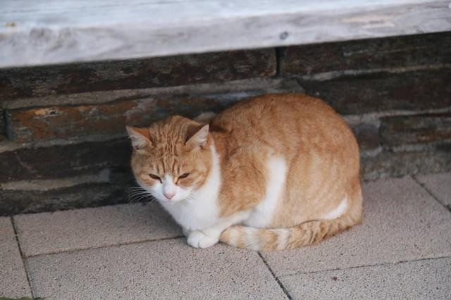 撮り貯まった猫の画像106枚目!
