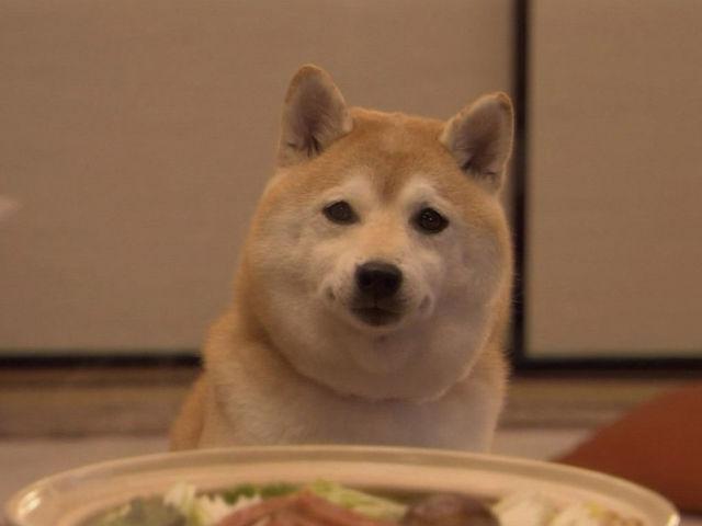 駄犬「ごす」の画像11枚目!