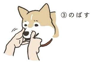 動物の顔芸スレの画像4枚目!