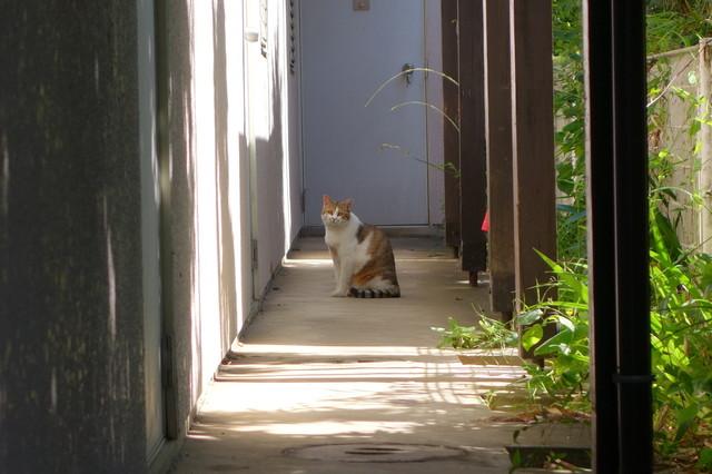 撮り貯まった猫の画像62枚目!