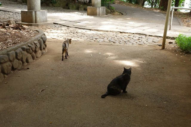 撮り貯まった猫の画像58枚目!