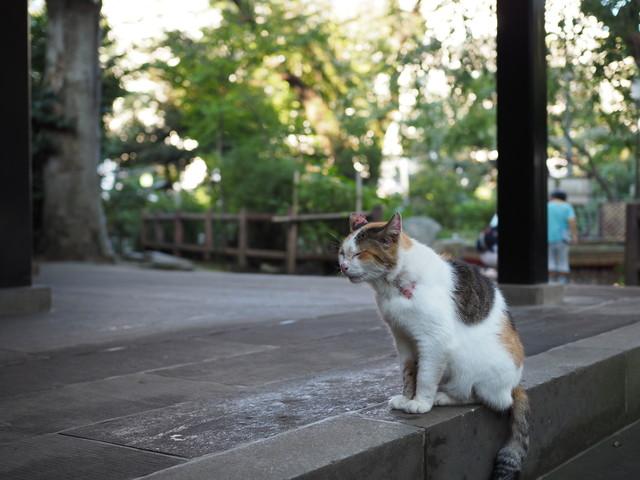 撮り貯まった猫の画像77枚目!