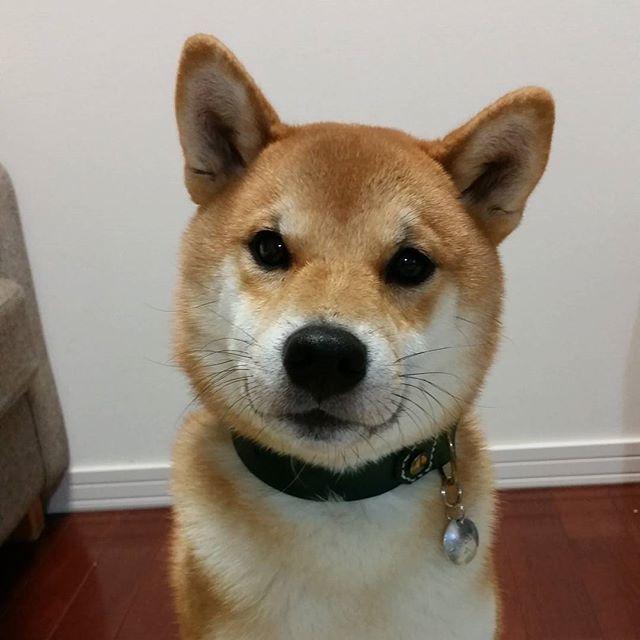 駄犬「ごすずんさむいんだけど」の画像1枚目!