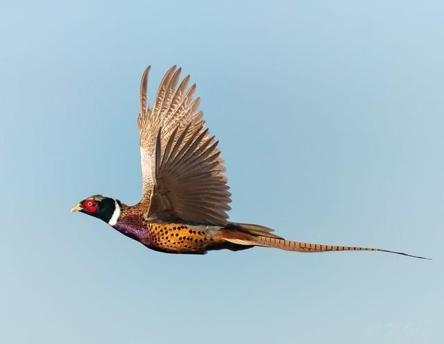 【愛鳥週間】県鳥の画像を貼ってくの画像10枚目!
