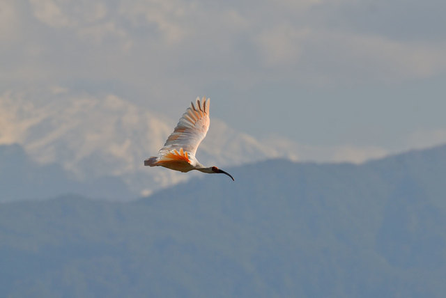 【愛鳥週間】県鳥の画像を貼ってくの画像45枚目!