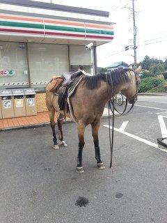 馬は軽車両の画像6枚目!
