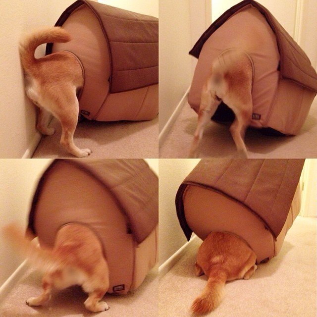 駄犬「ごすずん・・・いいのよ」の画像5枚目!