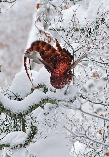 【愛鳥週間】県鳥の画像を貼ってくの画像14枚目!