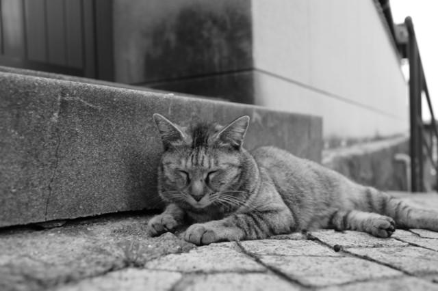 撮り貯まった猫の画像89枚目!