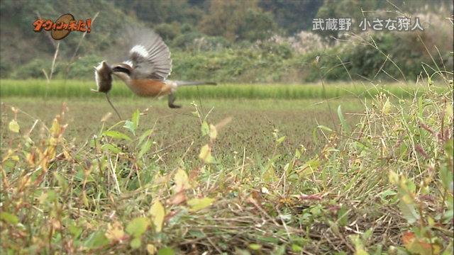 冬の鳥スレ<br />この季節に一度は見る鳥<br />スレ画はハクセキレイの画像11枚目!