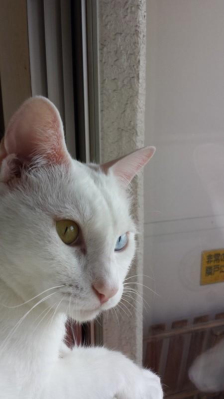 猫の画像45枚目!