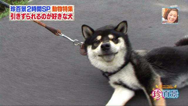 犬の画像36枚目!