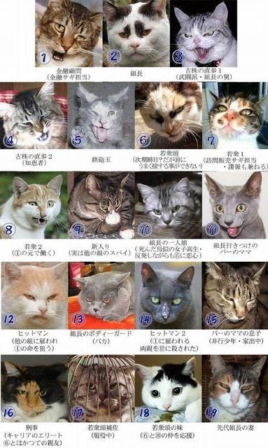 撮り貯まった猫の画像67枚目!