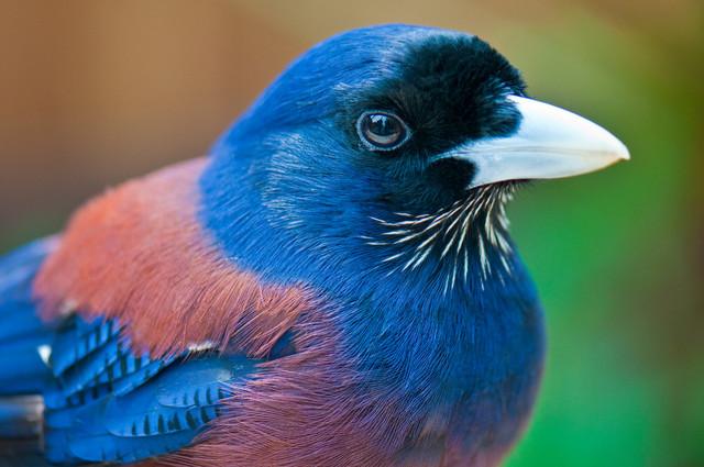 【愛鳥週間】県鳥の画像を貼ってくの画像116枚目!