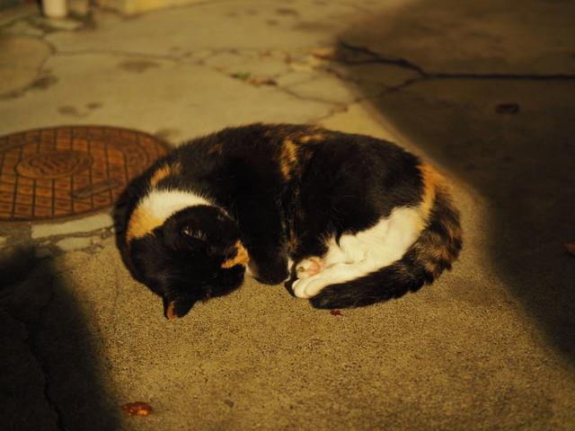 撮り貯まった猫の画像69枚目!