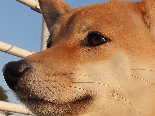 駄犬「おはごすんぽ」の画像1枚目!