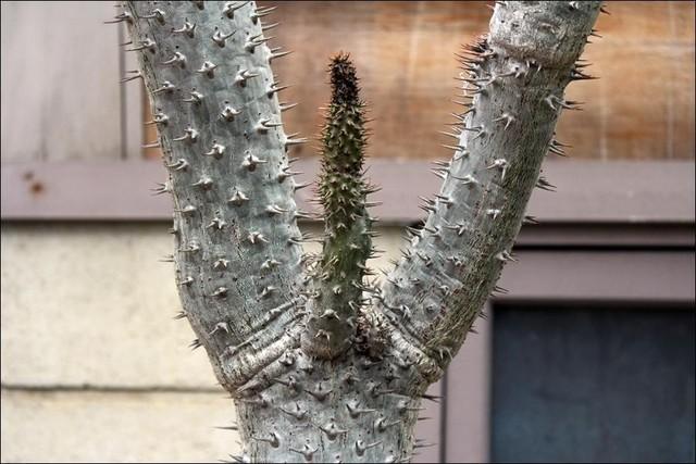 珍植物の画像25枚目!