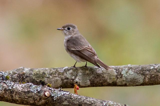 【愛鳥週間】県鳥の画像を貼ってくの画像22枚目!