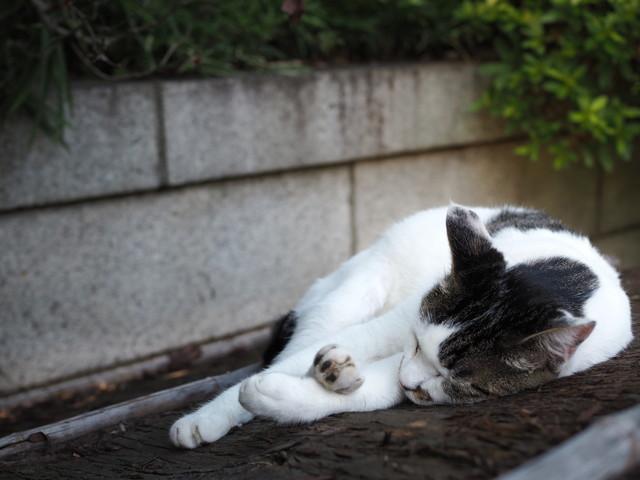 撮り貯まった猫の画像75枚目!