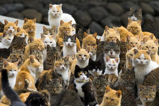 猫の画像30枚目!