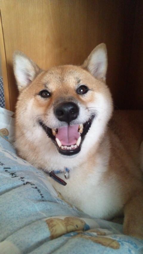 駄犬「ごすずん・・・いいのよ」の画像7枚目!