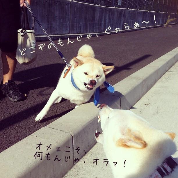 駄犬「ヌッ」の画像10枚目!