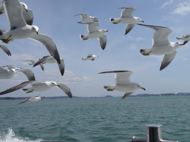 【愛鳥週間】県鳥の画像を貼ってくの画像43枚目!