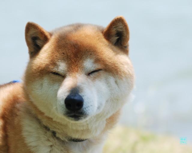 駄犬「もう寝ろ…ごす」の画像1枚目!