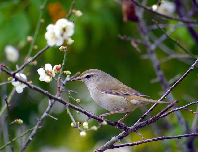 【愛鳥週間】県鳥の画像を貼ってくの画像59枚目!