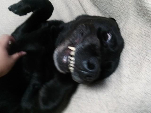 犬スレの画像5枚目!