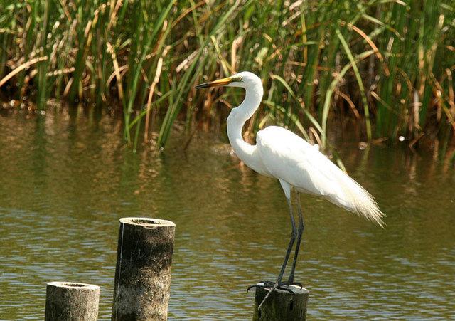 【愛鳥週間】県鳥の画像を貼ってくの画像98枚目!