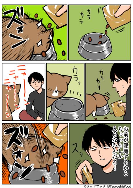 猫の画像33枚目!