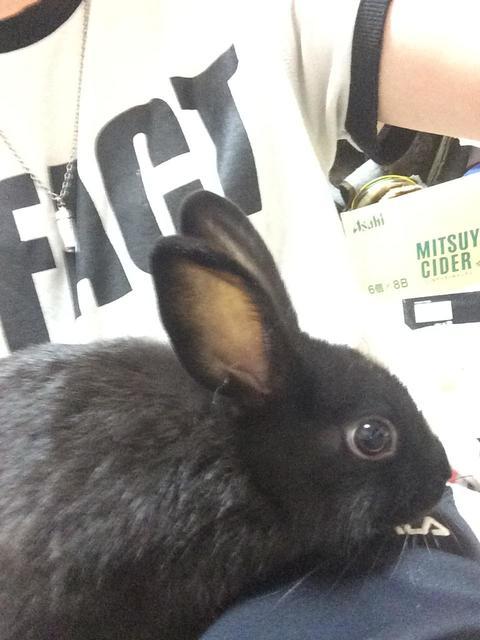 うちのウサギさんの写真うpしますの画像5枚目!