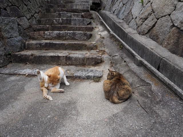撮り貯まった猫の画像100枚目!