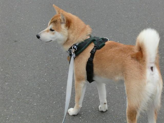 犬の画像3枚目!