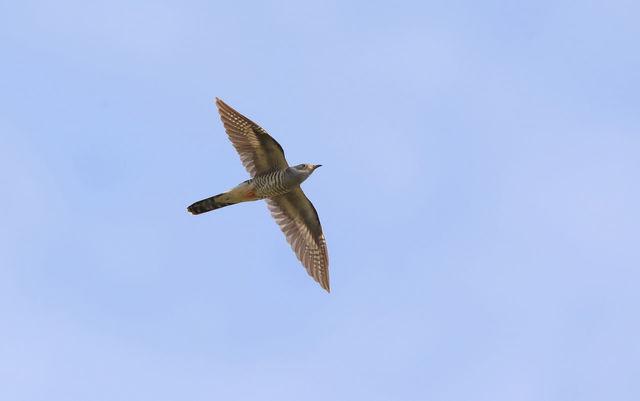 【愛鳥週間】県鳥の画像を貼ってくの画像102枚目!