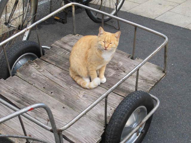 撮り貯まった猫の画像103枚目!