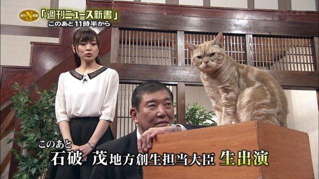 猫の画像37枚目!