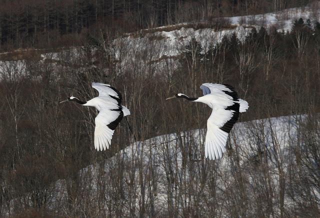 【愛鳥週間】県鳥の画像を貼ってくの画像4枚目!