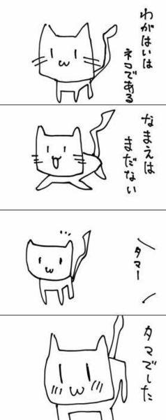 猫の画像40枚目!