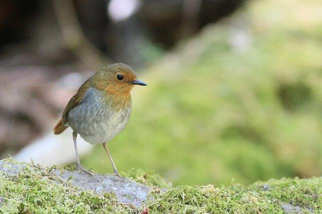 【愛鳥週間】県鳥の画像を貼ってくの画像85枚目!