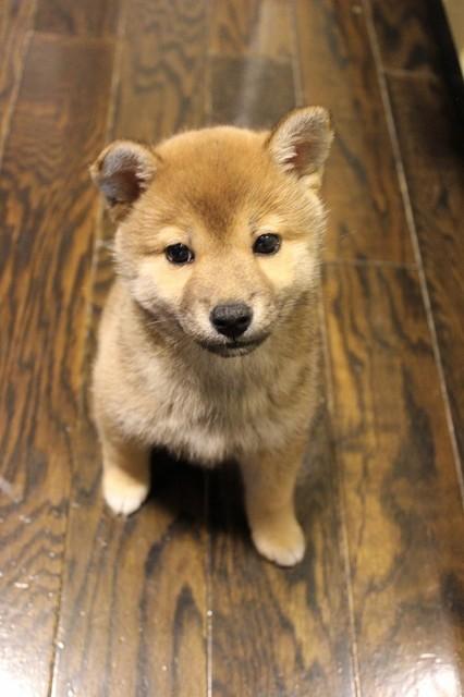 犬スレの画像2枚目!