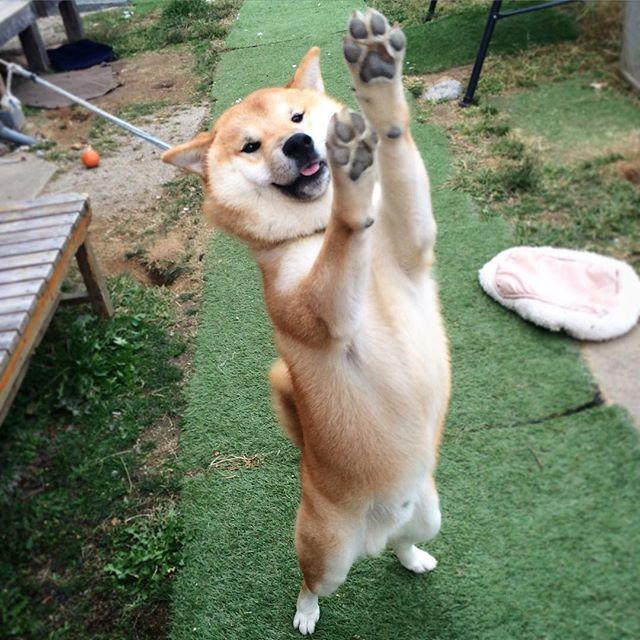 駄犬「ごすずんあそぼうぜ」の画像17枚目!
